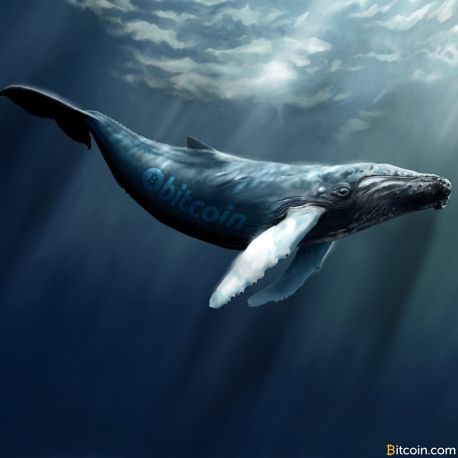 55% of All BTC Is Parked in Whale-Sized Wallets
