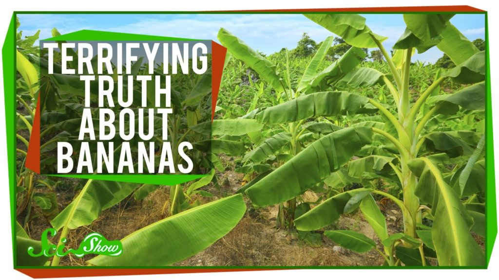The Terrifying Truth About Bananas