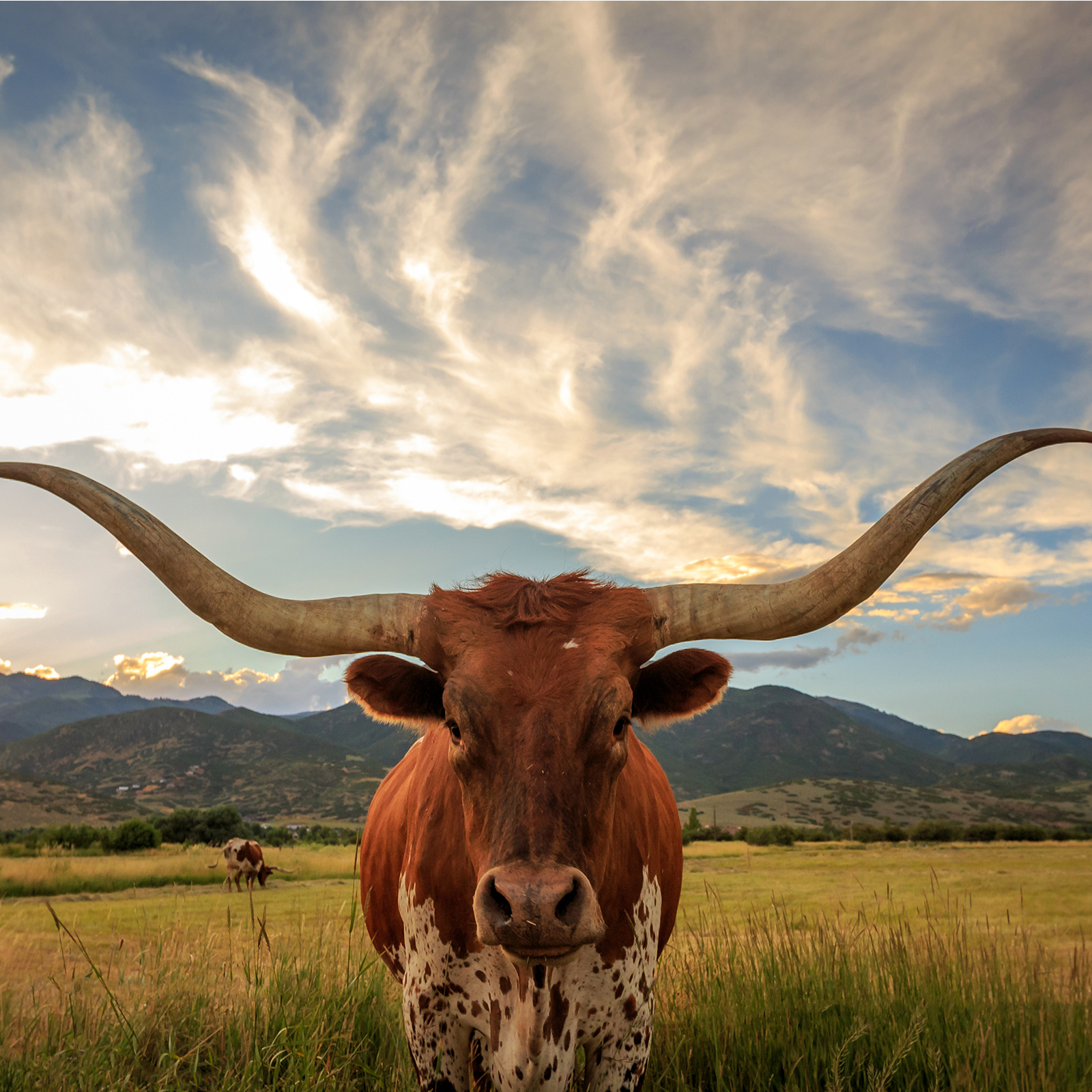 Texas Updates Regulatory Guidance Regarding Activities Involving Cryptocurrency