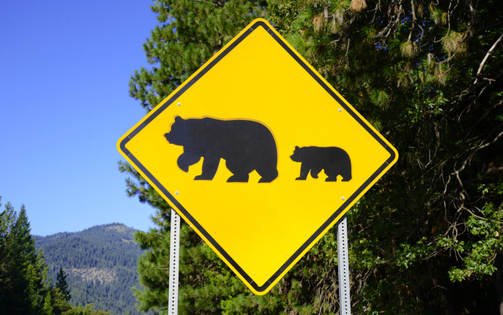 4 Survival Tactics for the Cryptocurrency Bear Market