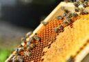Honey optimism a 'red herring', say Wairarapa beekeepers