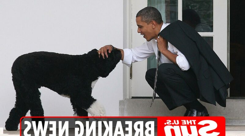 Barack Obama's dog Bo dead aged 12 – Former President pays tribute to 'true friend and loyal companion'